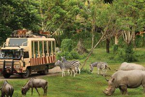 Half Day Bali Safari & Marine Park