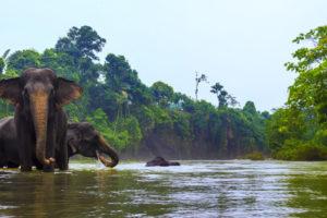 EXPLORE THE NATURE OF LEUSER NATIONAL PARK SUMATRA ELEPHANT &  ORANG UTAN